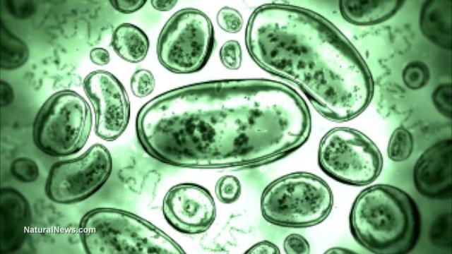 Top Five Advantages Of Probiotics