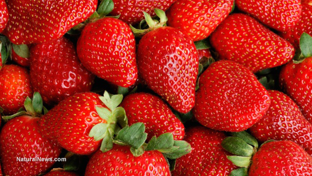 Red-Strawberries-Bunch-Harvest-Fruit