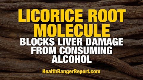 Licorice-Root-Molecule-Liver-Damage-Consuming-Alcohol-480